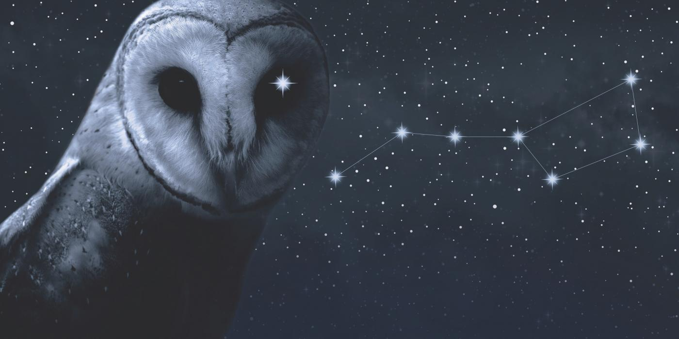 Snowy owl with constellation of stars